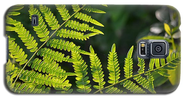 Glowing Fern Galaxy S5 Case