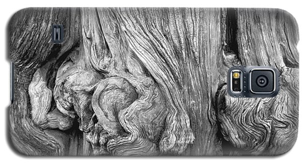 Gnarled Tree Galaxy S5 Case by Alexandra Jordankova