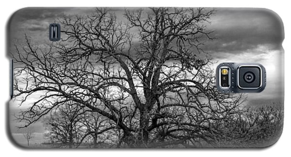 Galaxy S5 Case featuring the photograph Gnarly Tree by Sennie Pierson
