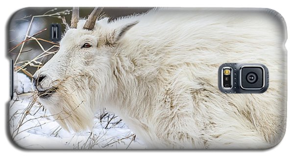 Galaxy S5 Case featuring the photograph Goat On The Mountain by Yeates Photography