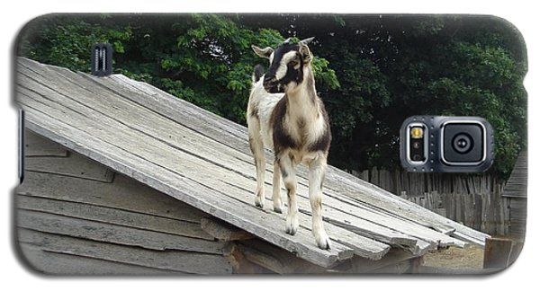 Galaxy S5 Case featuring the photograph Goat On The Roof by Kerri Mortenson