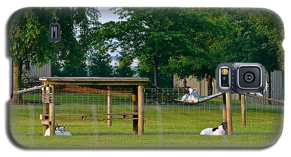 Goat Playground Galaxy S5 Case