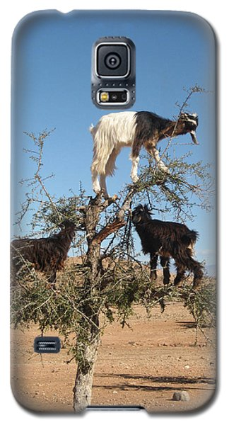 Goats In A Tree Galaxy S5 Case