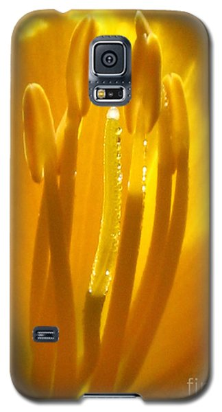 God's Light Shining Through Galaxy S5 Case