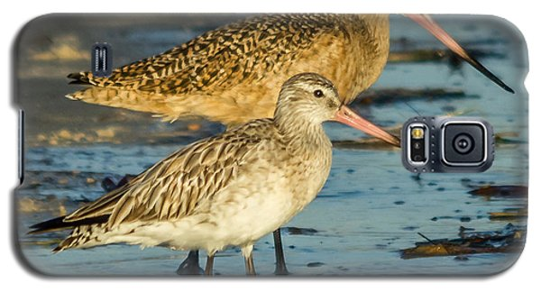 Godwits Galaxy S5 Case by Jane Luxton