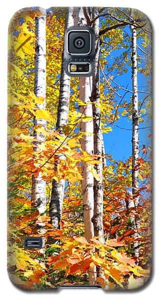 Gold Autumn Galaxy S5 Case