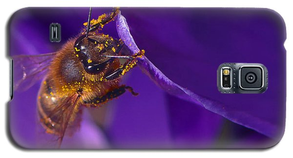 Gold Dust Galaxy S5 Case by Sharon Talson