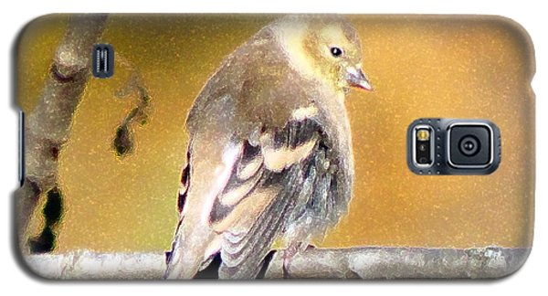 Gold Finch Galaxy S5 Case