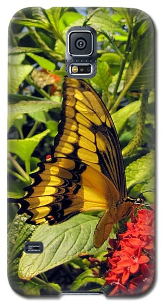 Gold Giant Swallowtail Galaxy S5 Case by Jennifer Wheatley Wolf
