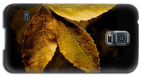 Gold Leaves 2013 Galaxy S5 Case