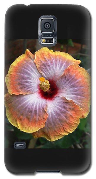 Gold Rim Hibiscus Galaxy S5 Case