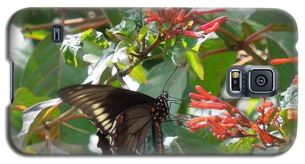 Galaxy S5 Case featuring the photograph Gold Rim Swallowtail by Ron Davidson