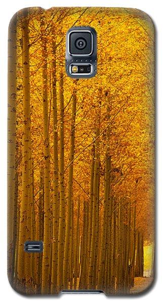 Golden Alley Galaxy S5 Case