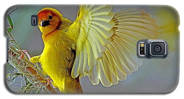 Golden Angel Galaxy S5 Case by Rodney Campbell