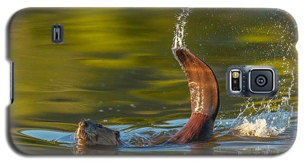 Golden Arch  Galaxy S5 Case