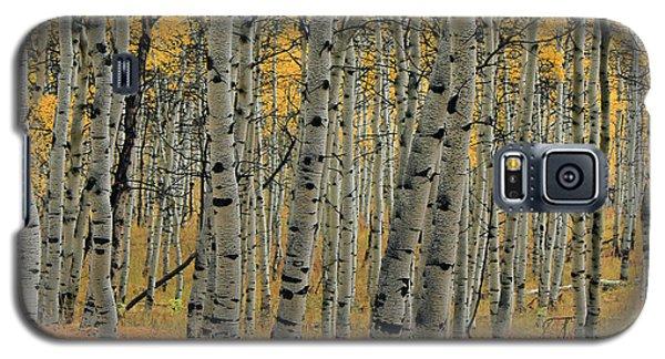 Golden Aspen Forest Galaxy S5 Case