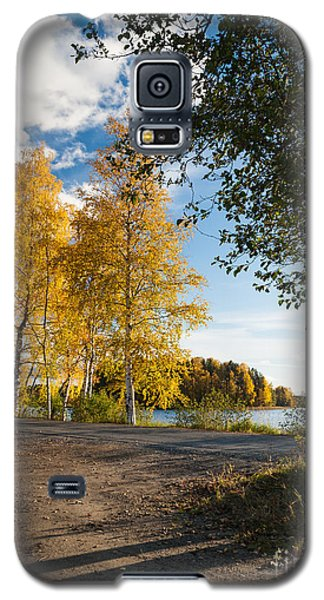 Golden Autumn Birches Galaxy S5 Case