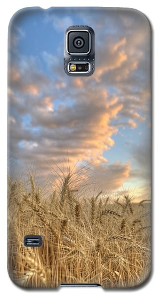 Golden Barley Galaxy S5 Case