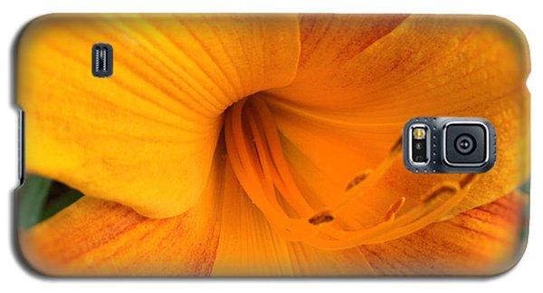 Golden Blossom Galaxy S5 Case by Paul Cammarata