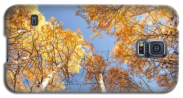 Galaxy S5 Case featuring the photograph Golden Canopy by The Forests Edge Photography - Diane Sandoval