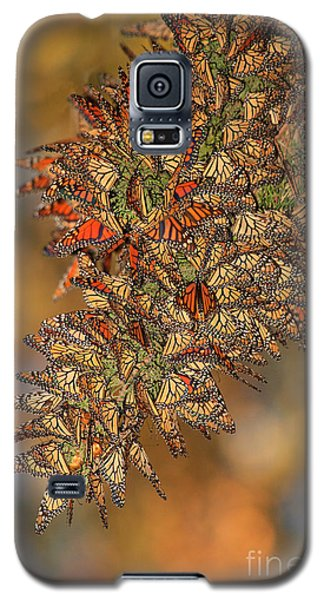 Golden Cluster Galaxy S5 Case
