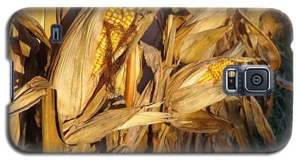 Galaxy S5 Case featuring the photograph Golden Corn by Joseph Skompski