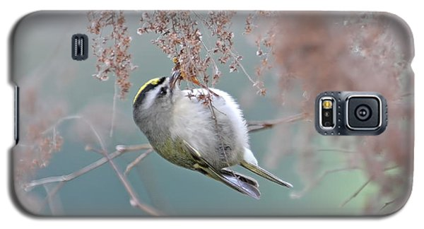 Golden Crowned Kinglet And Oceanspray Galaxy S5 Case by Peggy Collins