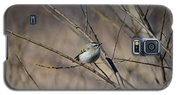 Golden-crowned Kinglet Galaxy S5 Case