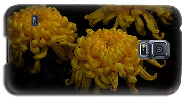 Galaxy S5 Case featuring the photograph Golden Crysanthemums by Cassandra Buckley