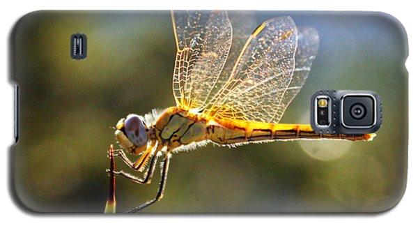 Golden Dragonfly Galaxy S5 Case
