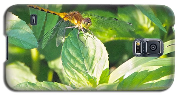 Golden Dragonfly On Mint Galaxy S5 Case