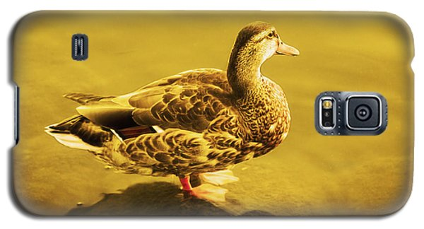 Galaxy S5 Case featuring the photograph Golden Duck by Nicola Nobile