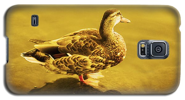 Golden Duck Galaxy S5 Case