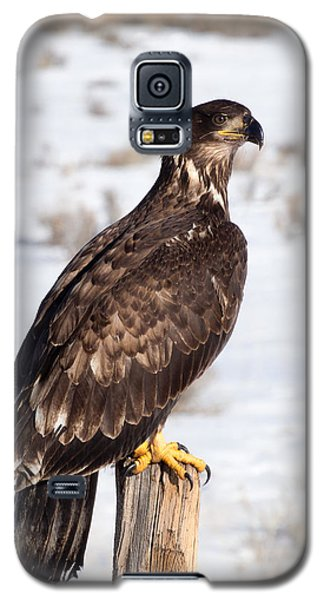 Golden Eagle On Fencepost Galaxy S5 Case