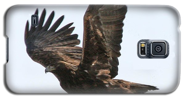 Golden Eagle Takes Off Galaxy S5 Case