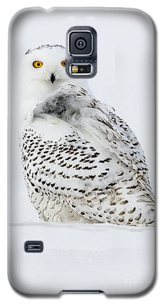 Golden Eyes Galaxy S5 Case