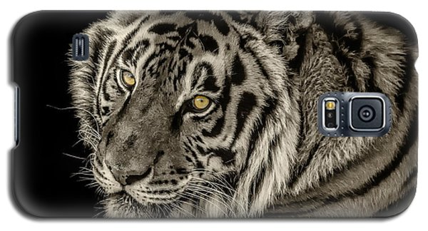 Golden Eyes Of The Tiger Galaxy S5 Case by Julie Clements