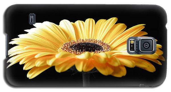 Golden Gerbera Daisy No 2 Galaxy S5 Case