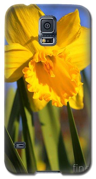 Golden Glory Daffodil Galaxy S5 Case