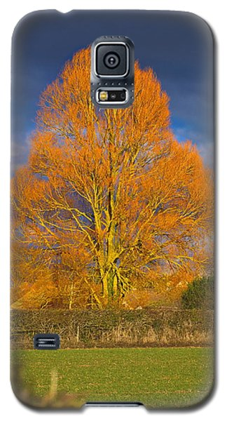 Golden Glow - Sunlit Tree Galaxy S5 Case