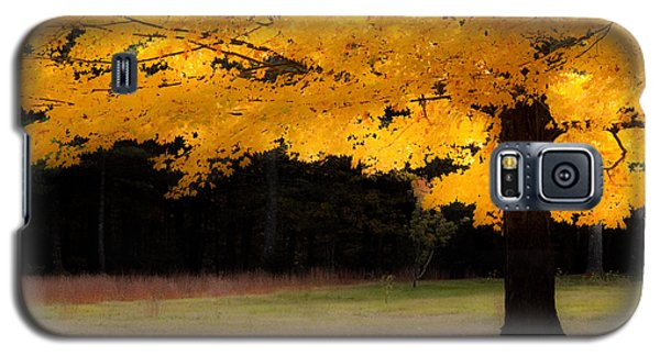 Golden Glow Of Autumn Fall Colors Galaxy S5 Case