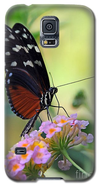 Golden Helicon Butterfly - Say What Galaxy S5 Case