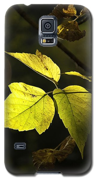 Golden Leaves Galaxy S5 Case
