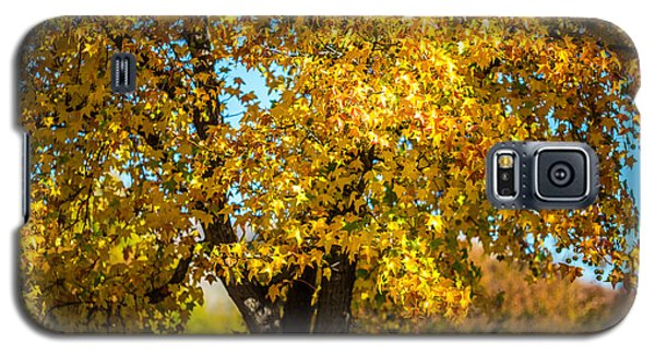 Galaxy S5 Case featuring the photograph Golden Leaves Of Autumn by Mike Lee
