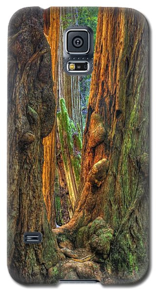 Golden Light Reaches The Grove Floor Muir Woods National Monument Late Winter Early Afternoon Galaxy S5 Case