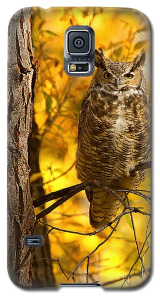 Golden Owl Galaxy S5 Case by Aaron Whittemore
