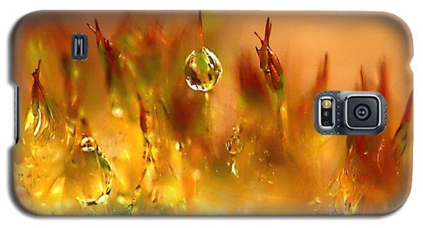 Golden Palette Galaxy S5 Case