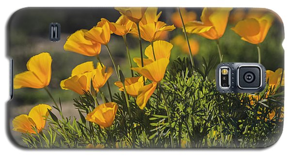 Golden Poppies Galaxy S5 Case by Tamara Becker
