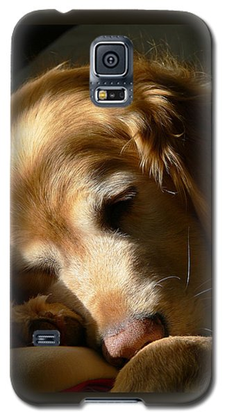 Golden Retriever Dog Sleeping In The Morning Light  Galaxy S5 Case