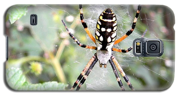 Galaxy S5 Case featuring the photograph Golden Silk Spider by Jodi Terracina